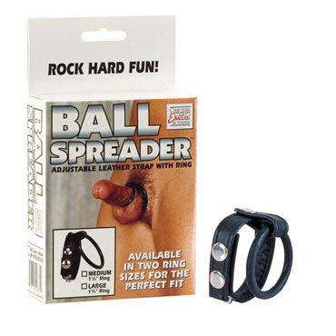 California Exotic Ball Spreader Medium Сбруя на пенис и мошонку среднего размера